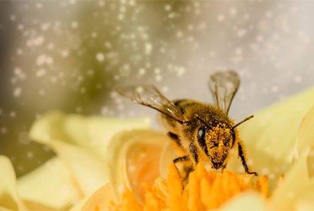 Allergie, Pollen, Stich