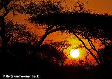 Werner Beck - Afrika Sonne